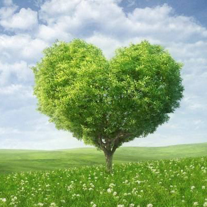 安邦长青树重大疾病保险